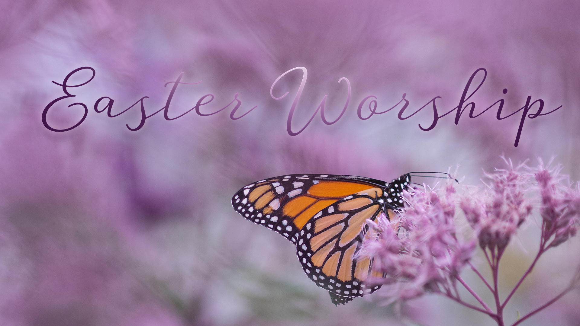 Butterfly on flower with Easter Worship text